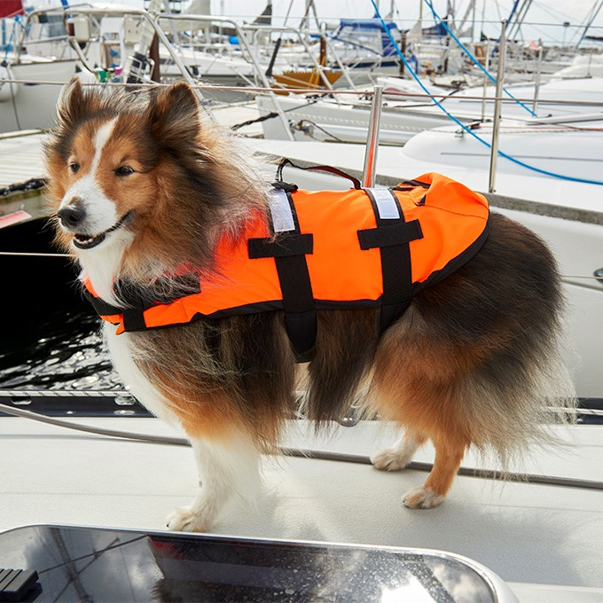 Life vest for dogs!